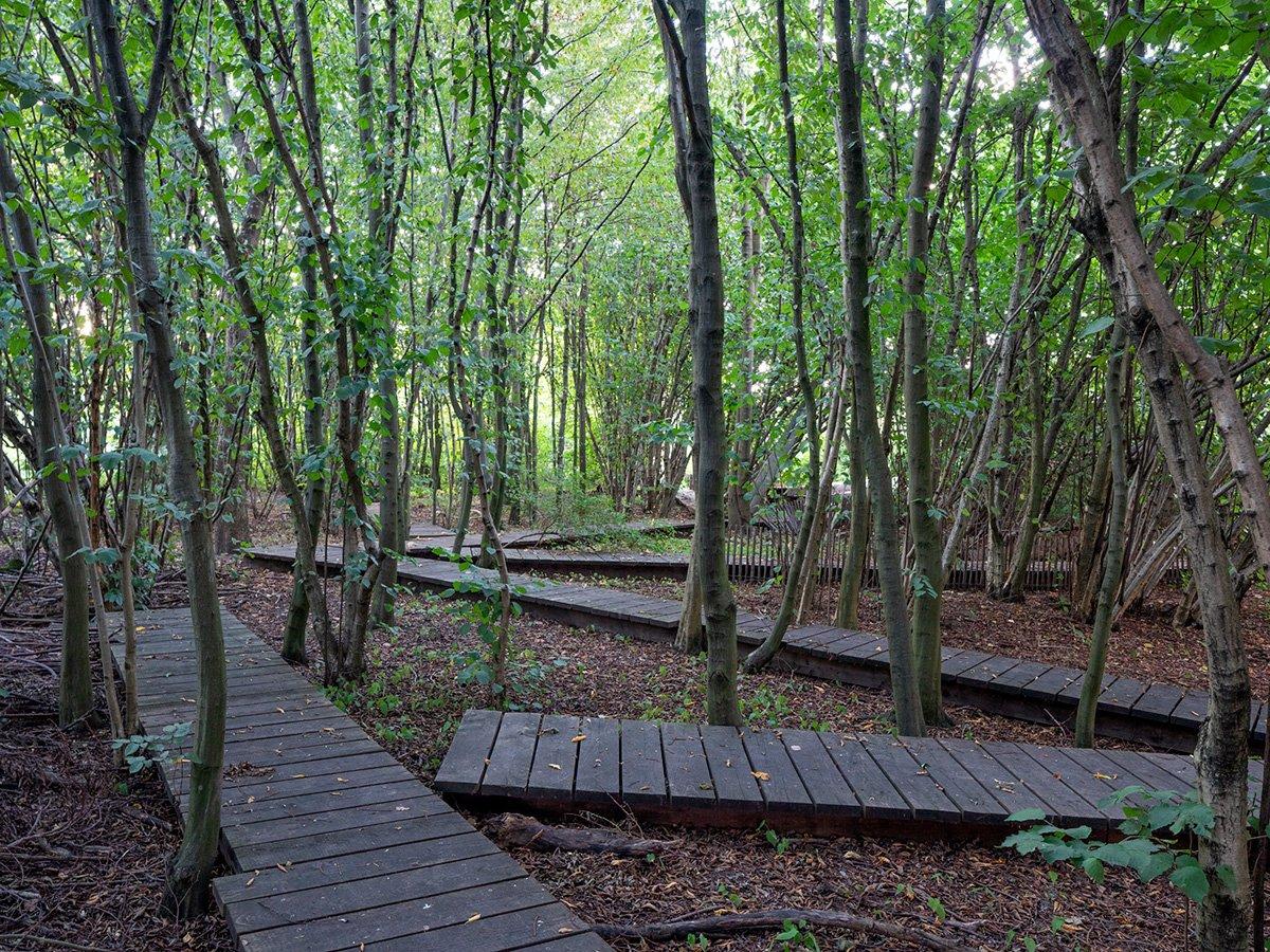 Blick in den Haselnusshain, der über Holzstege begehbar ist.